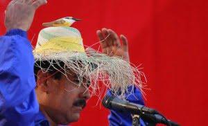 Calavera Maduro